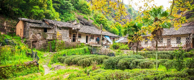 Home of Tea China