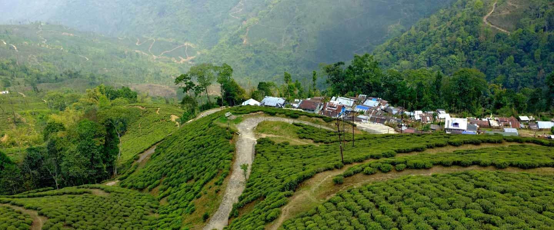 Home of Tea India