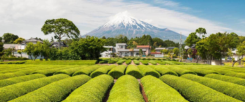 Home of Tea Japan