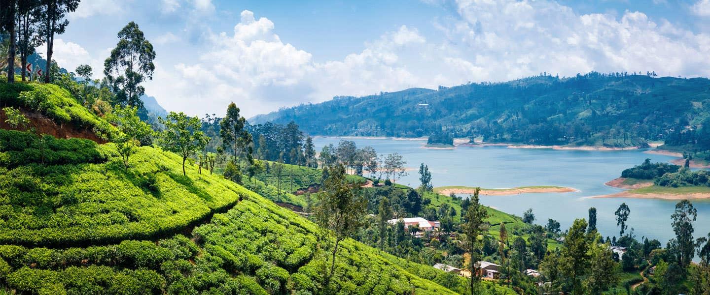 Home of Tea Sri Lanka