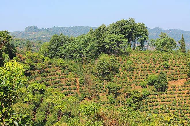 Organic Yunnan Breakfast Origin