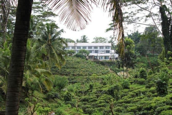 Ceylon Breakfast Origin