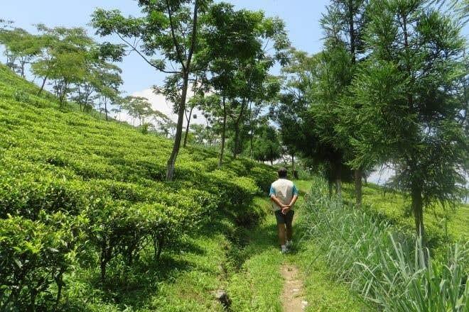 Darjeeling First Flush Origin